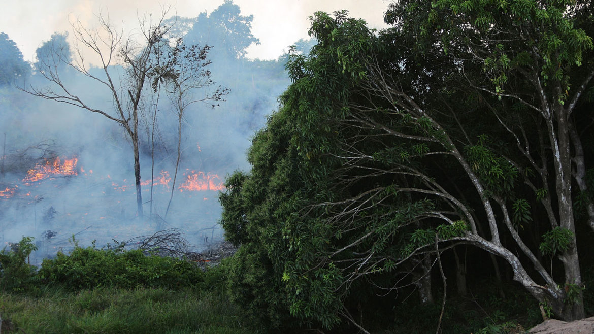 Fires could have affected as much as 85 p.c of threatened Amazon species